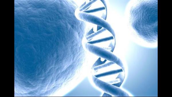 GMP咨询之CAR-T细胞疗法